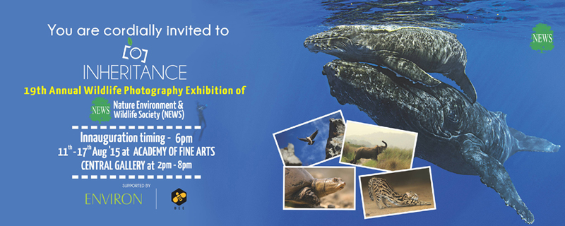 Nature photo exhibition kolkata indian wildlife club ezine visit us at central gallery academy of fine arts kolkata between 11 17 august and be a part of this celebration stopboris Image collections