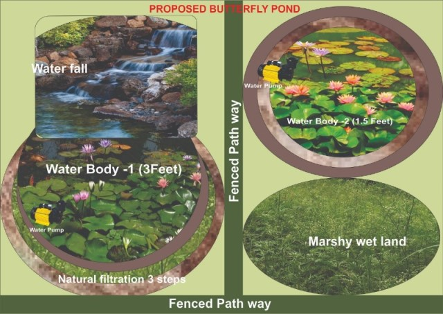 Butterfly Pond Map